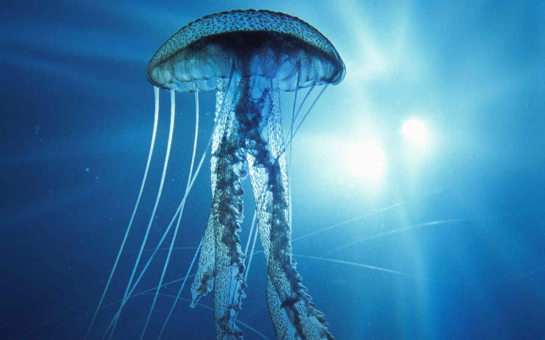 Località con più meduse della Sardegna