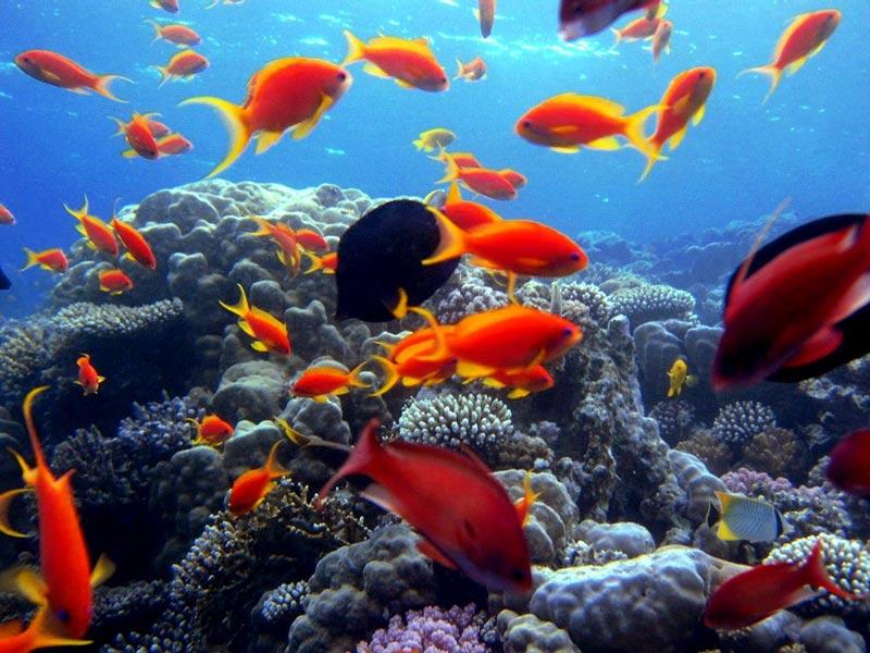 Come visitare barriera corallina Bahamas