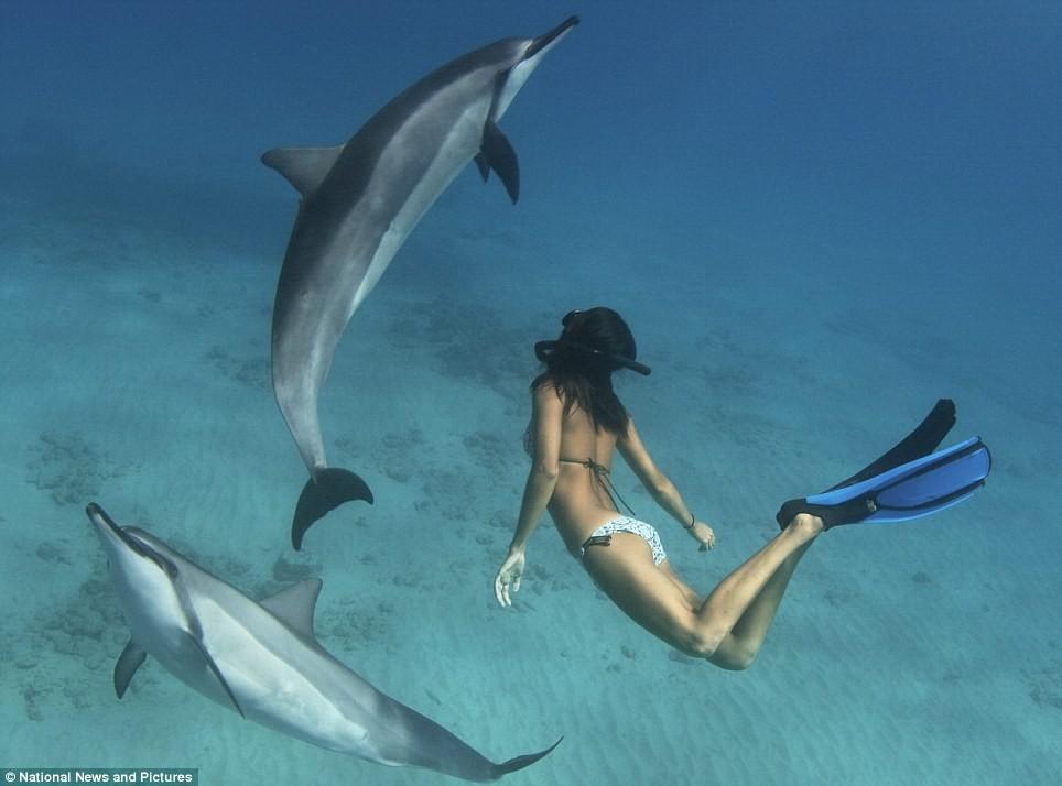 3 migliori posti dove nuotare con i delfini