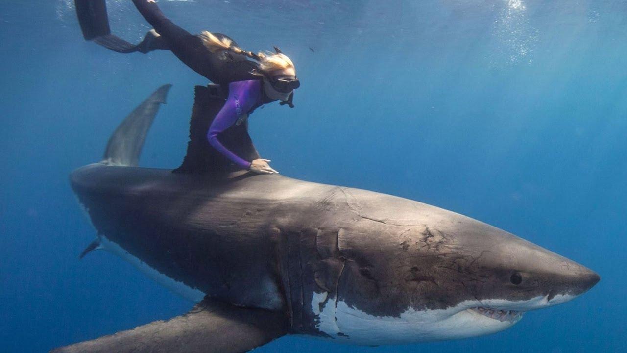 4 migliori posti dove nuotare con gli squali