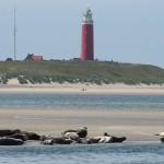 Cosa visitare isola di Texel, Olanda