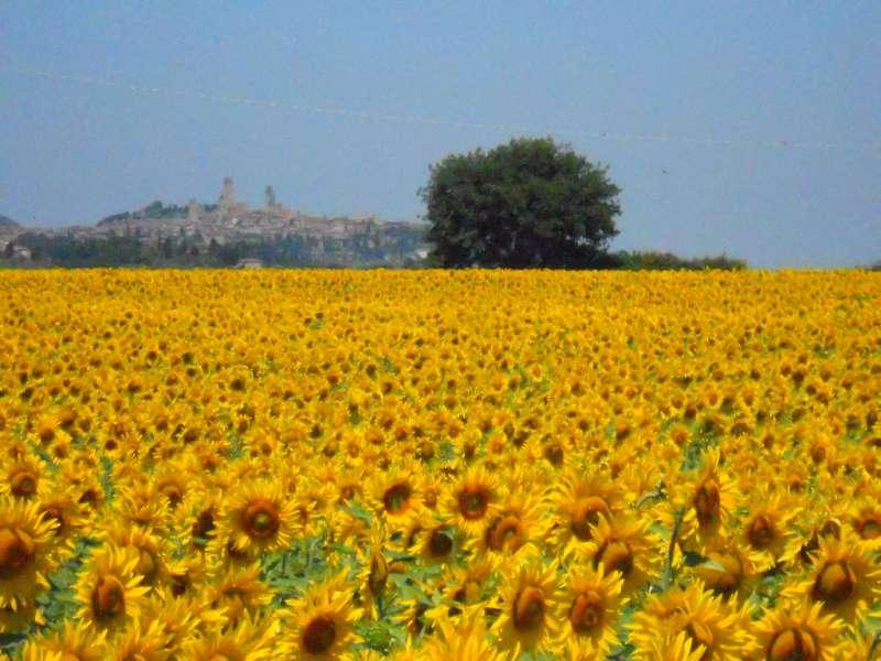 Campi di girasole più belli d'Italia, località