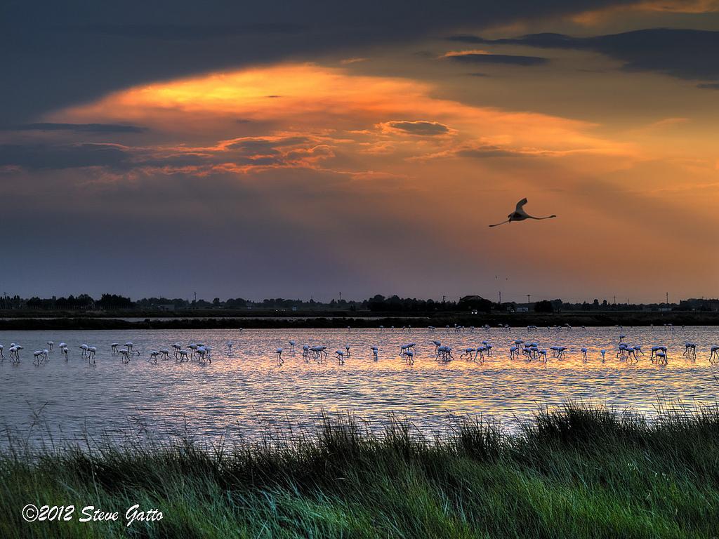 Come vedere i fenicotteri rosa sulle saline di cervia - Bagno i figli del sole cervia ...