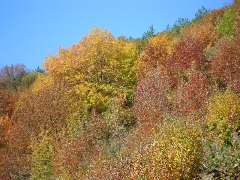 Cinque borghi dell'Umbria da visitare in autunno