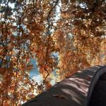 10 cose da fare a Roma in autunno