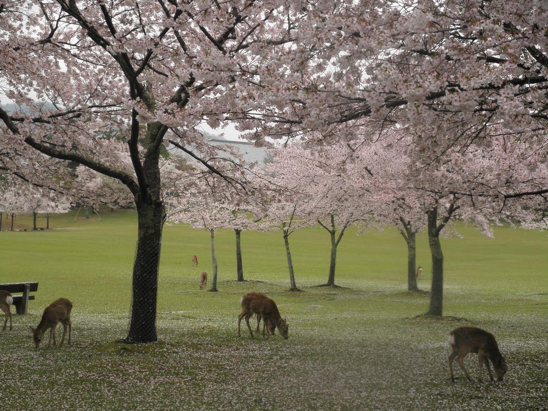 10 cose da visitare a Nara