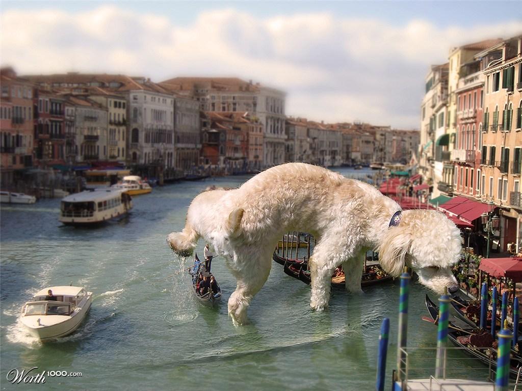 Hotel che accettano cani venezia for Dove soggiornare a venezia