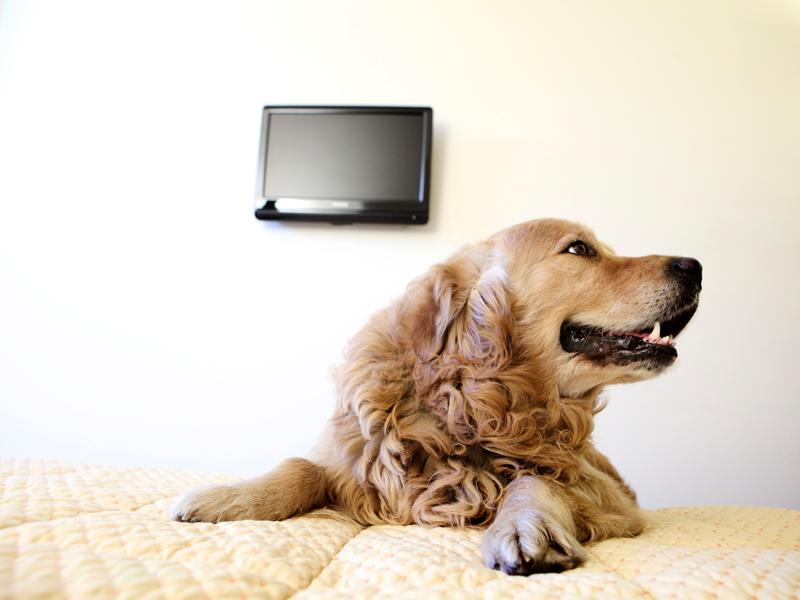Hotel che accettano cani Milano