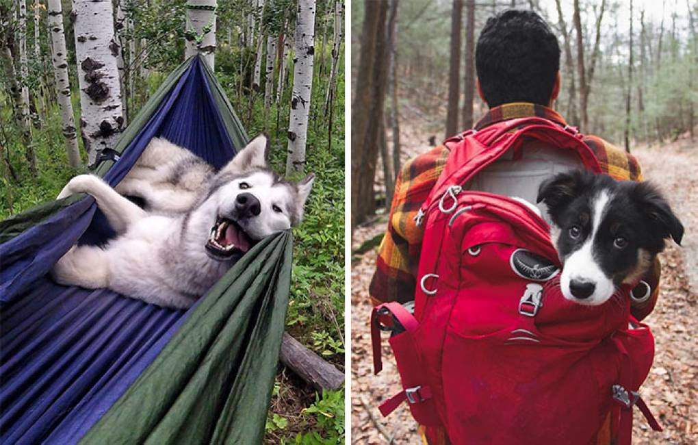 Località camping con cane Chieti