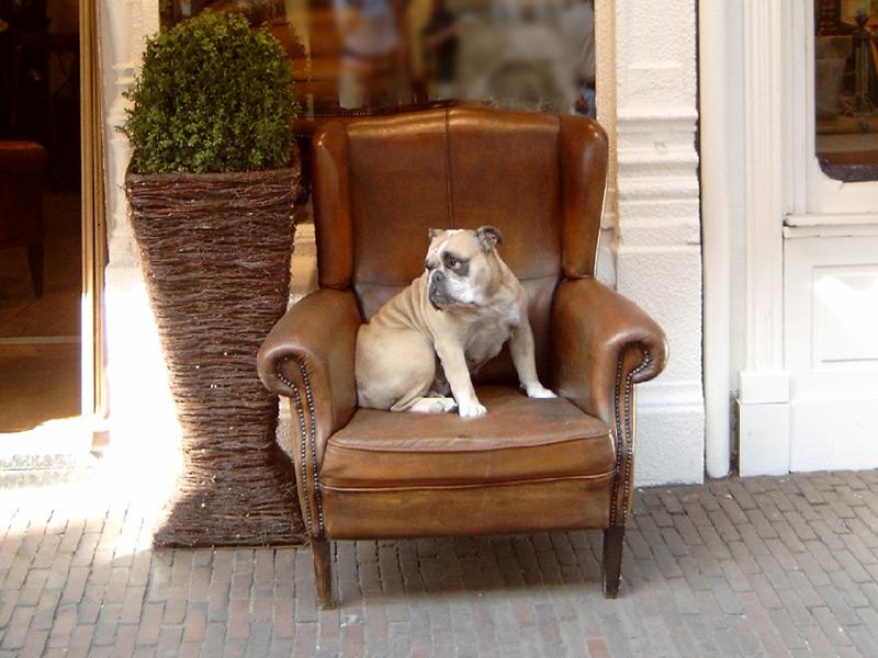 Hotel che accettano cani a Torino