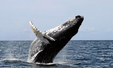 10 luoghi migliori al mondo dove vedere le balene