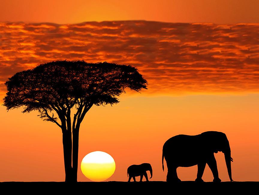 Parco del Serengeti, Tanzania