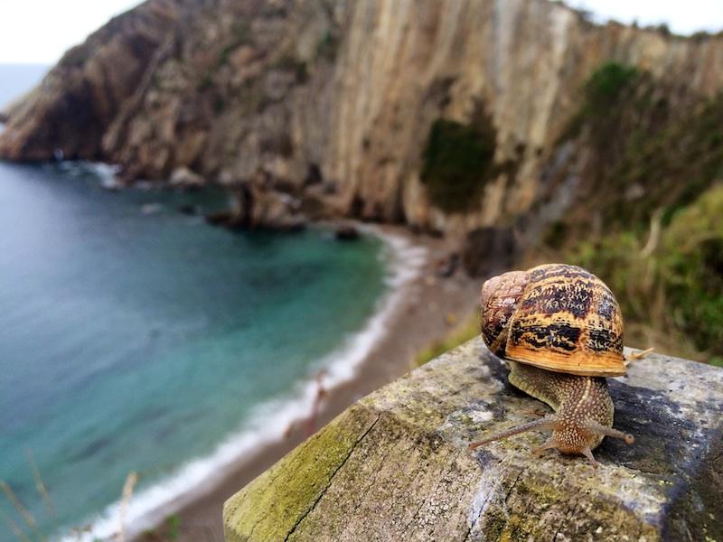 Che cosa vedere in Cantabria in Spagna