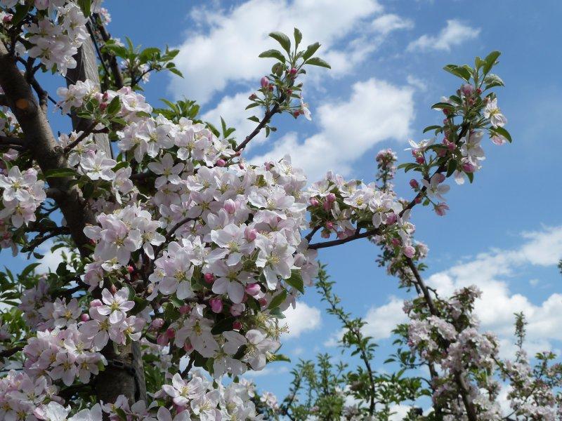 Come trascorrere Pasqua in Trentino