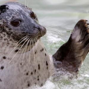 cornish-seal-sanctuary