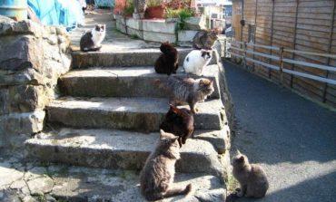 Tashirojima, l'isola dei gatti