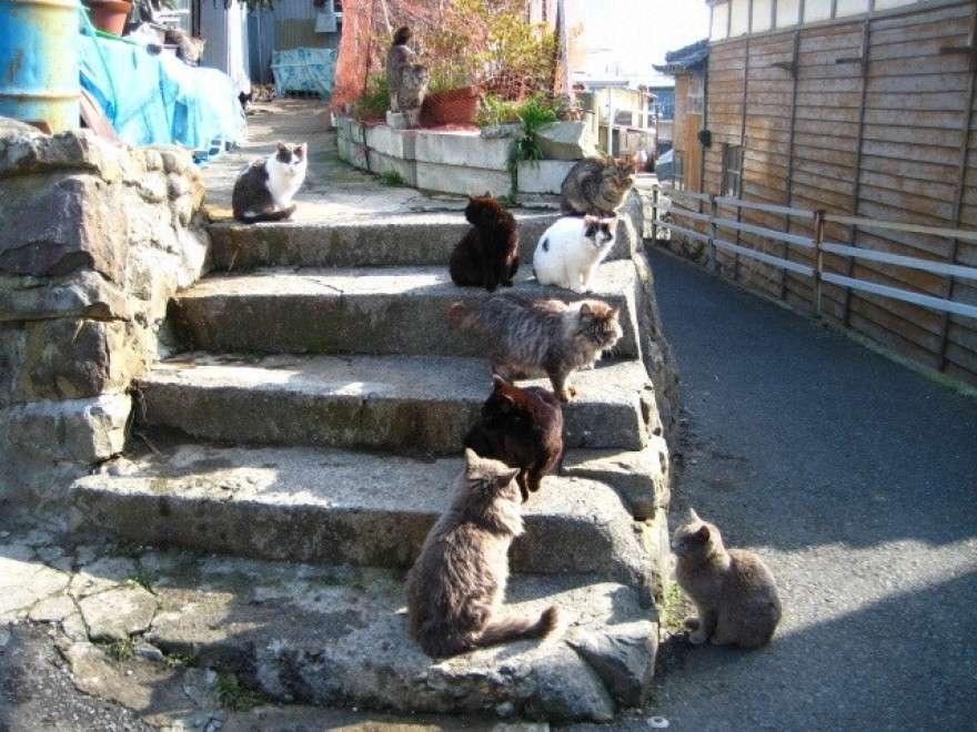 gatti sui gradini al sole tashirojima