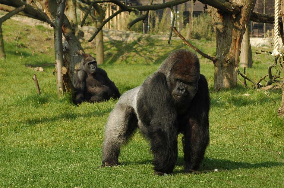 Quali animali vedere allo zoo di Londra