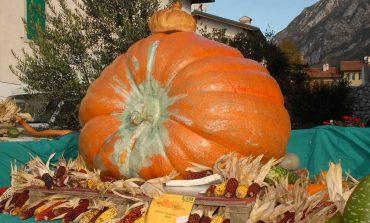 Festa della zucca: luogo, date e come arrivarci