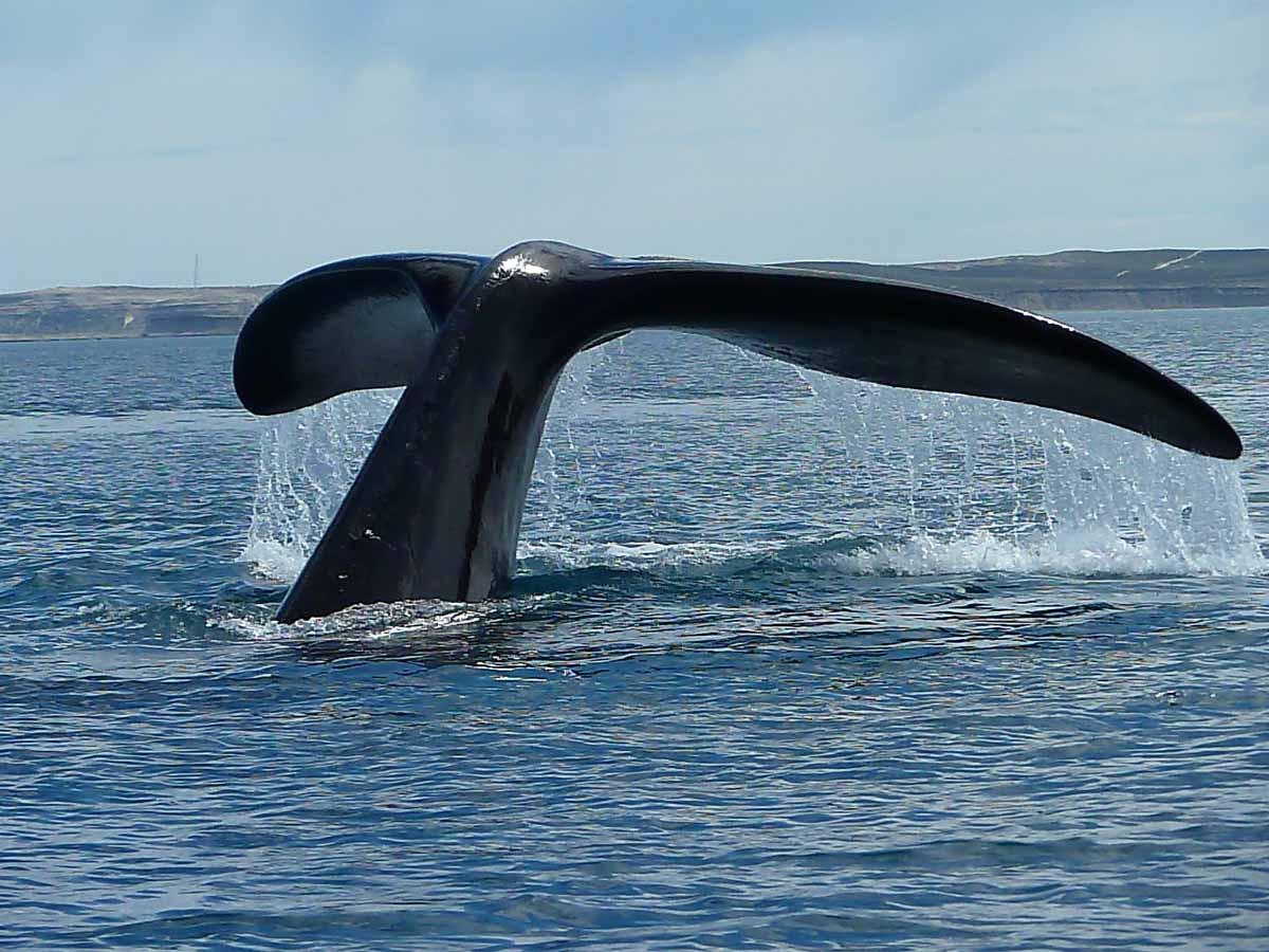 balena tofino