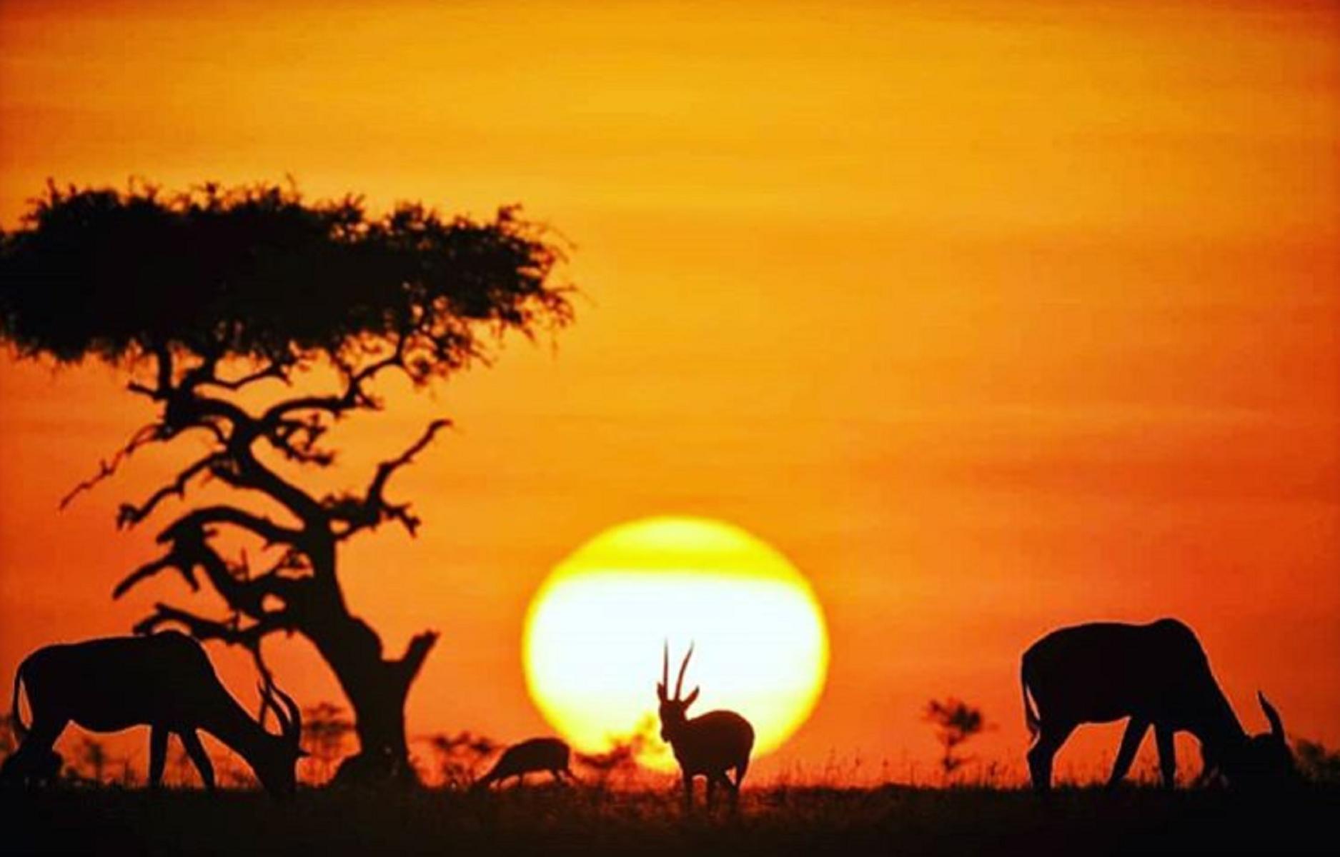 Cosa vedere in Africa: le destinazioni da non perdere