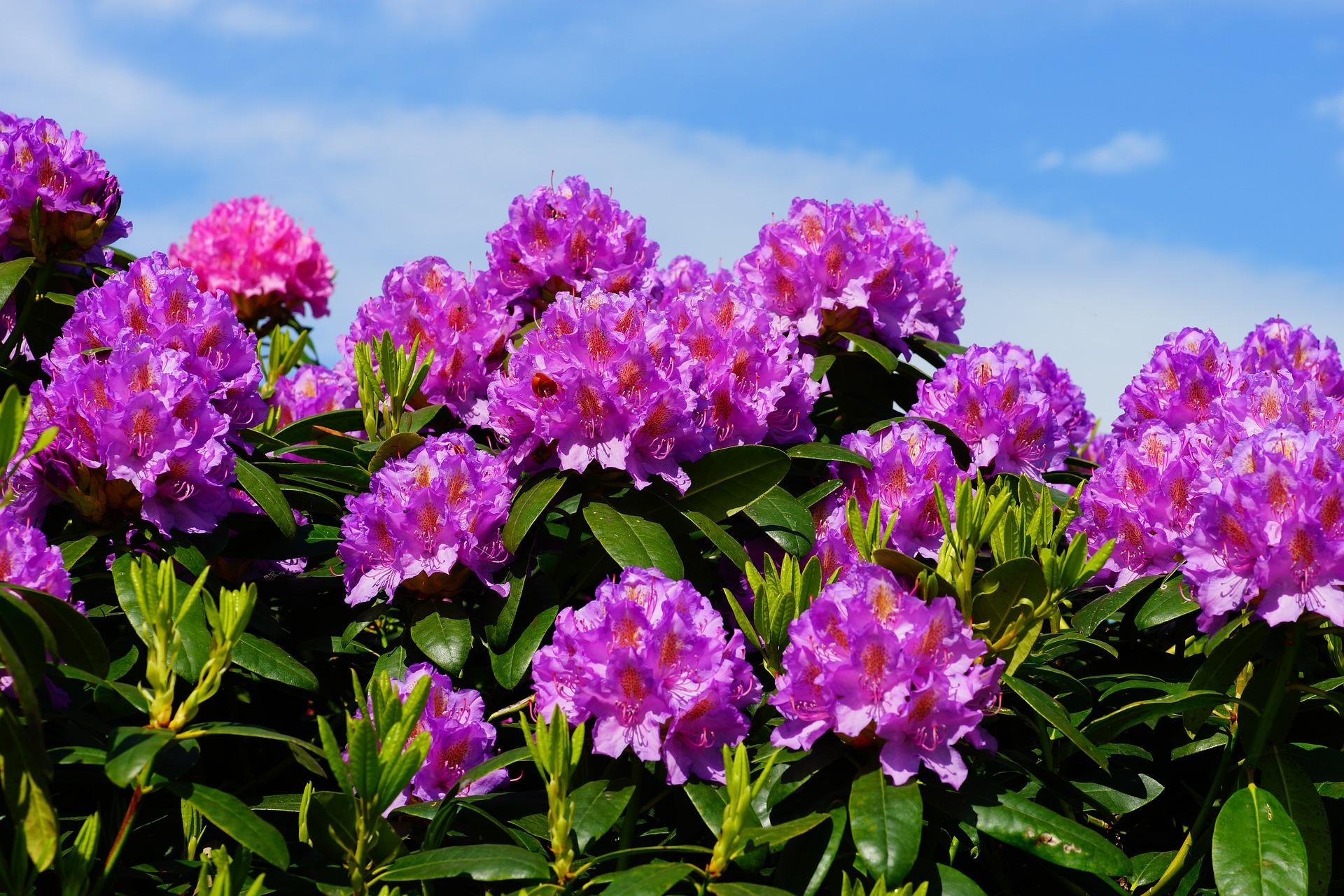 Conca dei Rododendri: come e quando visitarla