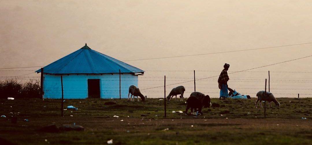 qunu pastorizia