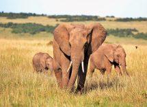 Migliori Safari al mondo: la classifica