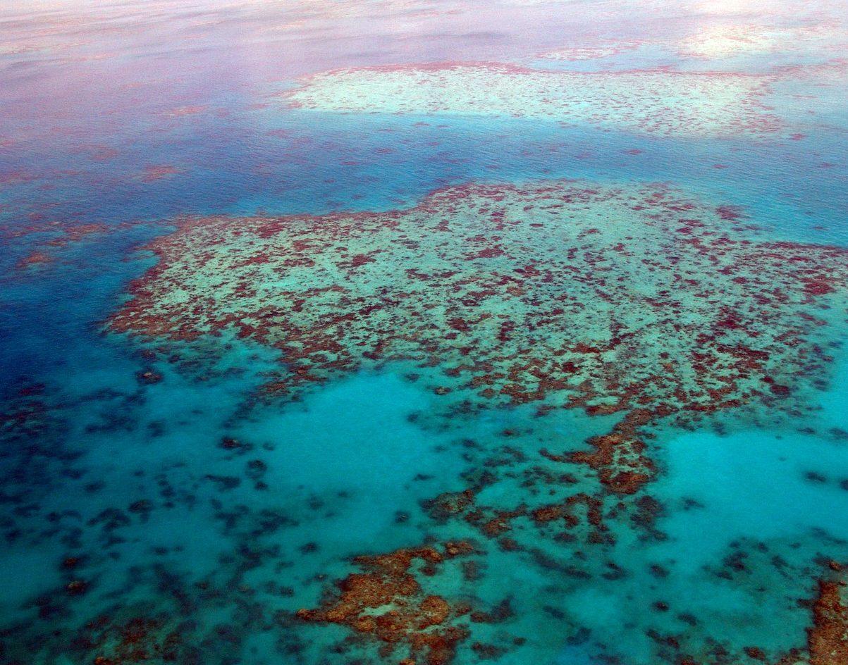grande barriera corallina