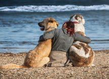 migliori spiagge attrezzate per cani