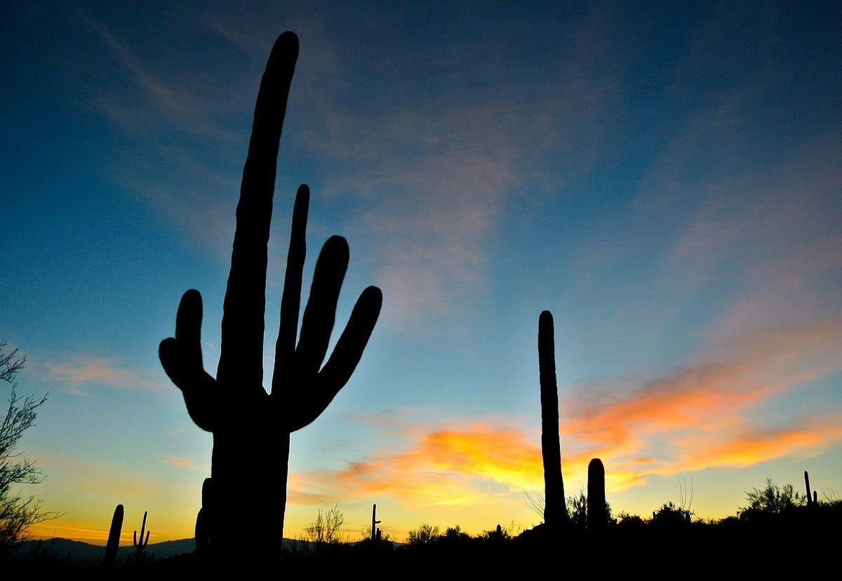 cactus deserto americano