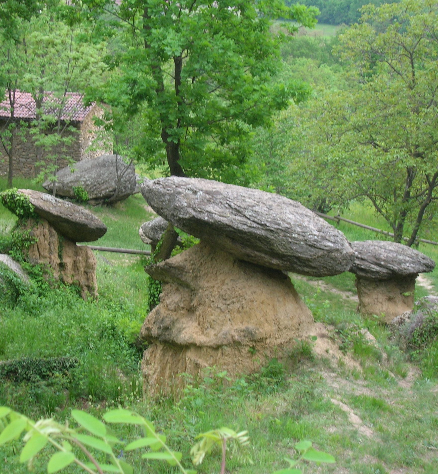 funghi giganti