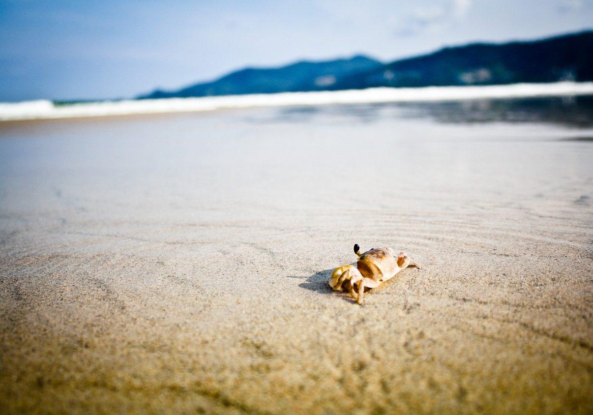 granchi palline di sabbia