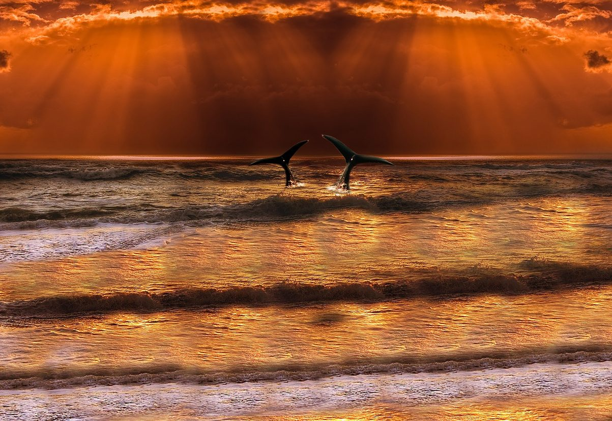 perchè spiaggiano le balene