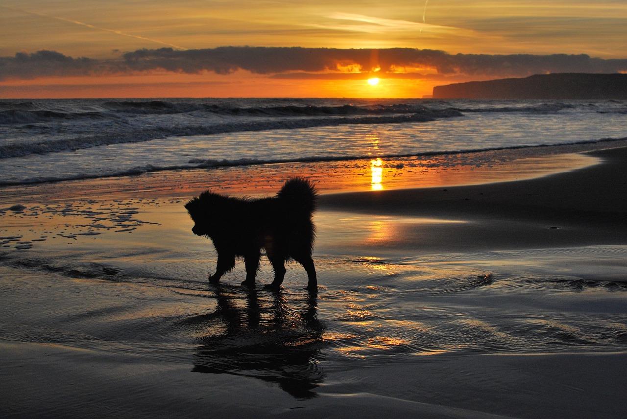 porto cesareo spiagge per cani