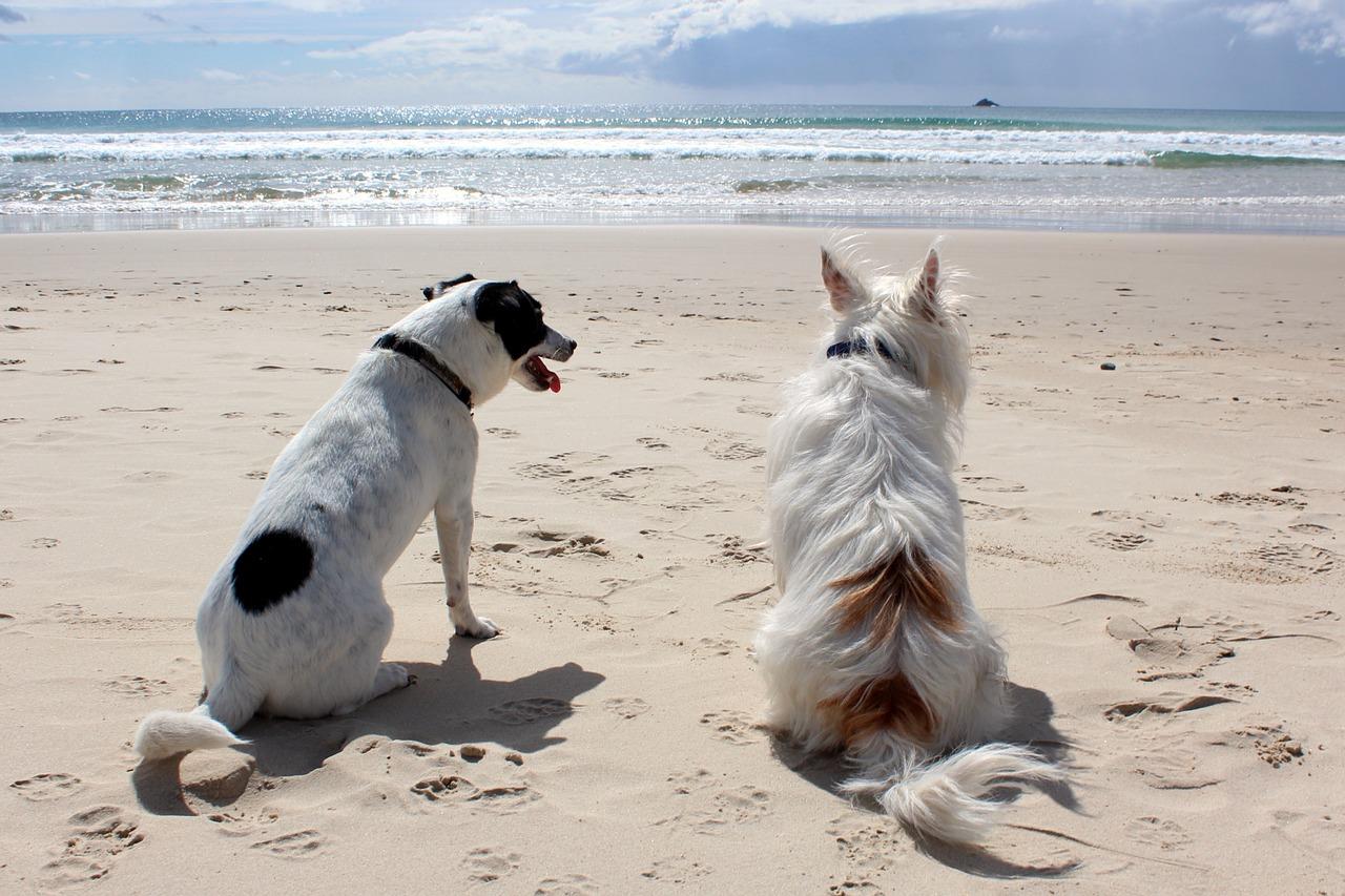 sicilia spiagge per cani