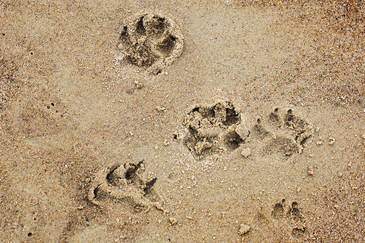 castellamare del golfo spiagge cani