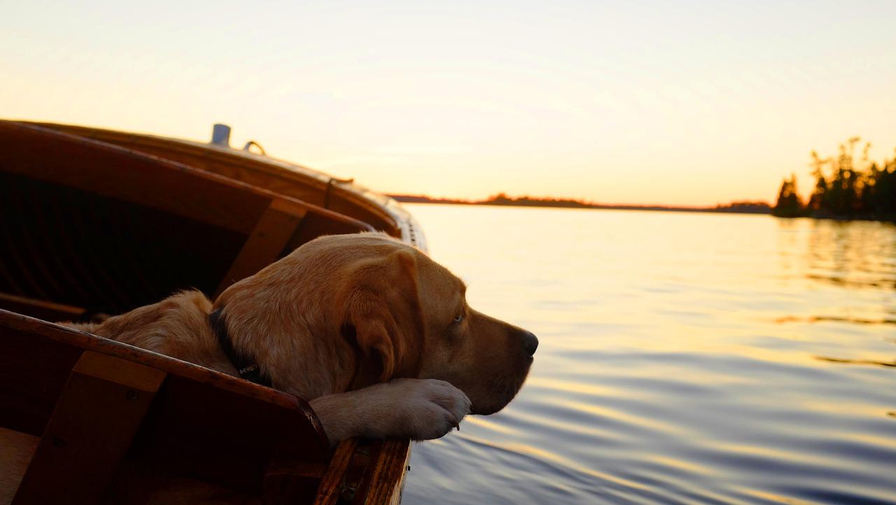 lago di garda spiagge cani