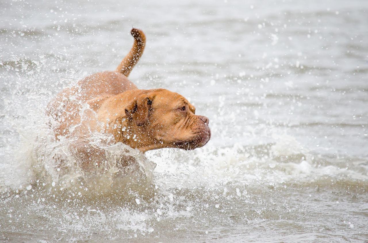 liguria spiagge per cani
