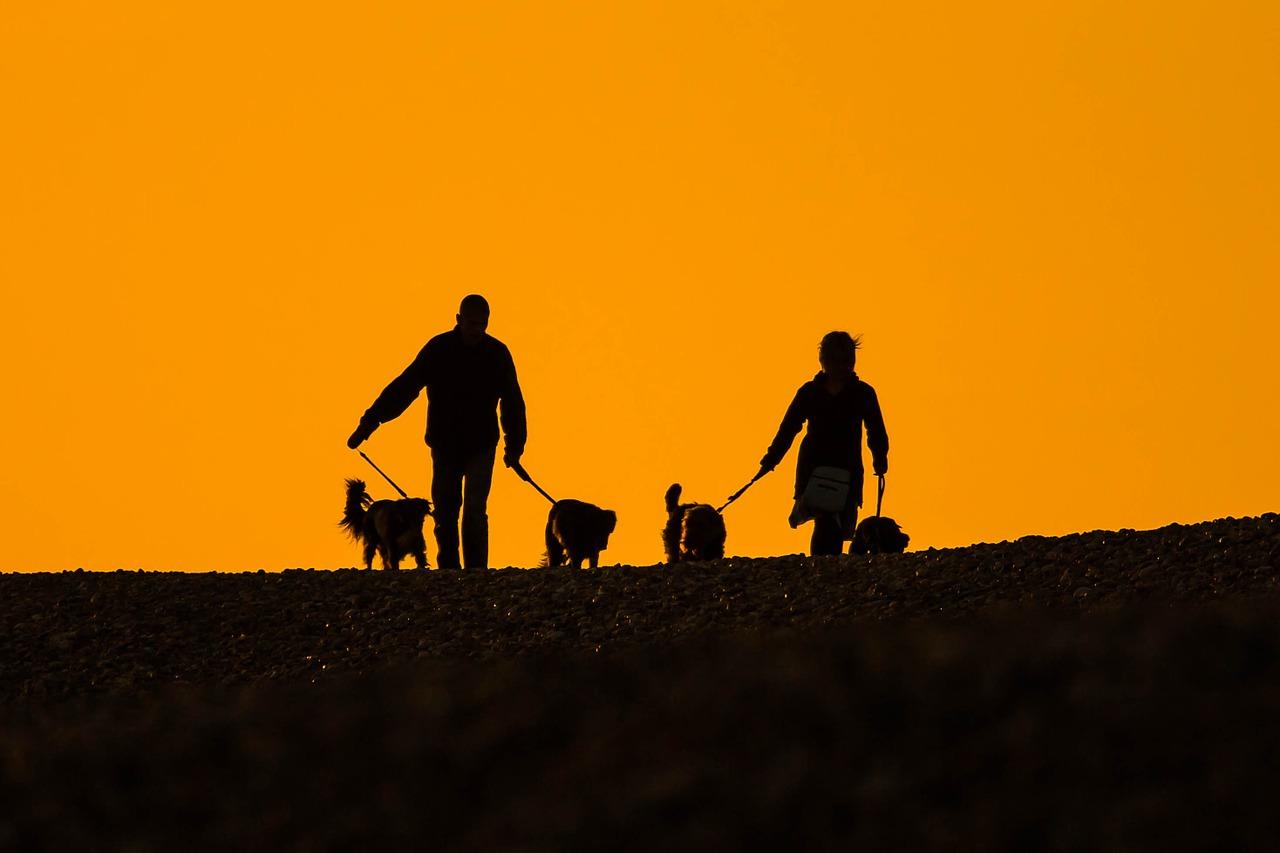 spiagge toscana per cani