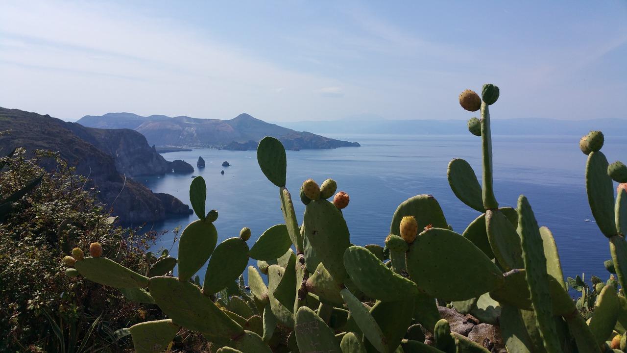 fichi d'india sicilia
