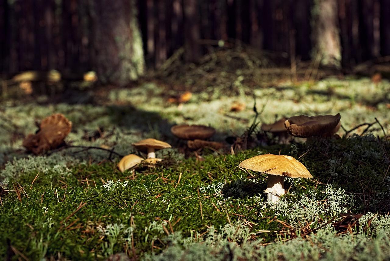 funghi piemonte