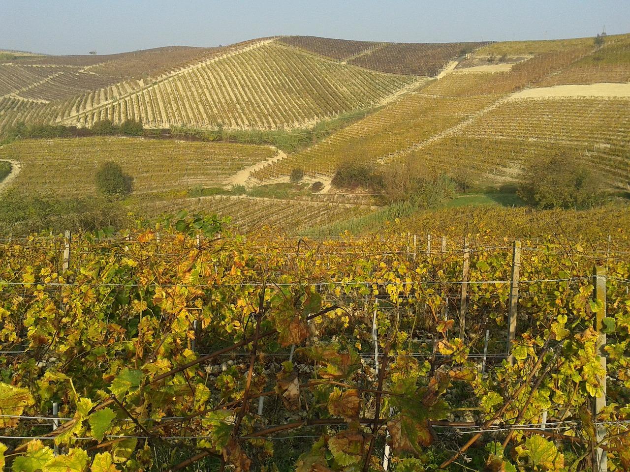 strada del vino monferrato