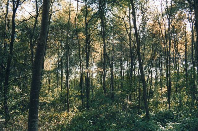 Bosco della Panfilia