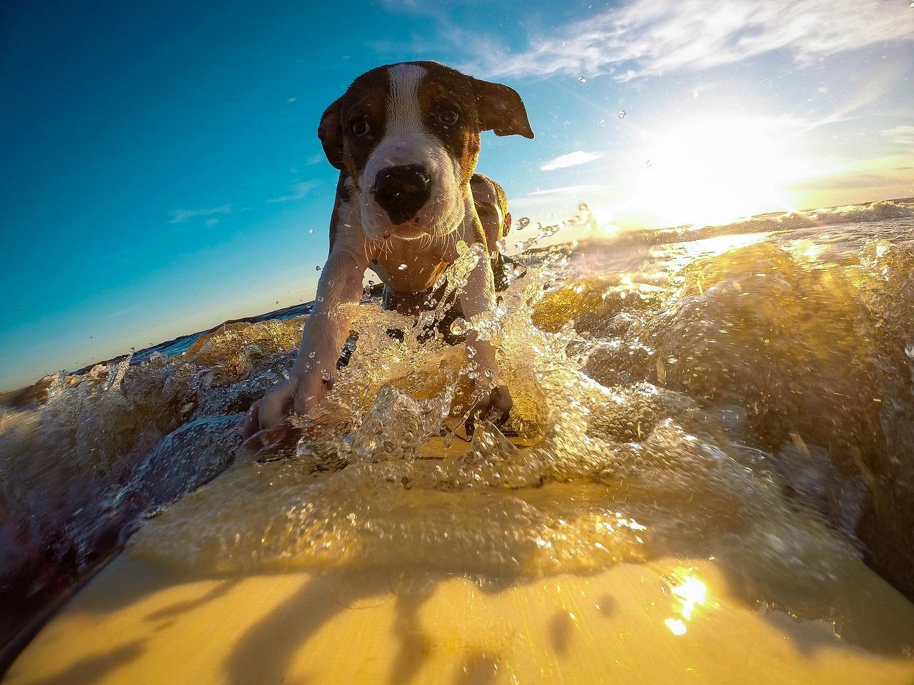 insegnare surf ai cani