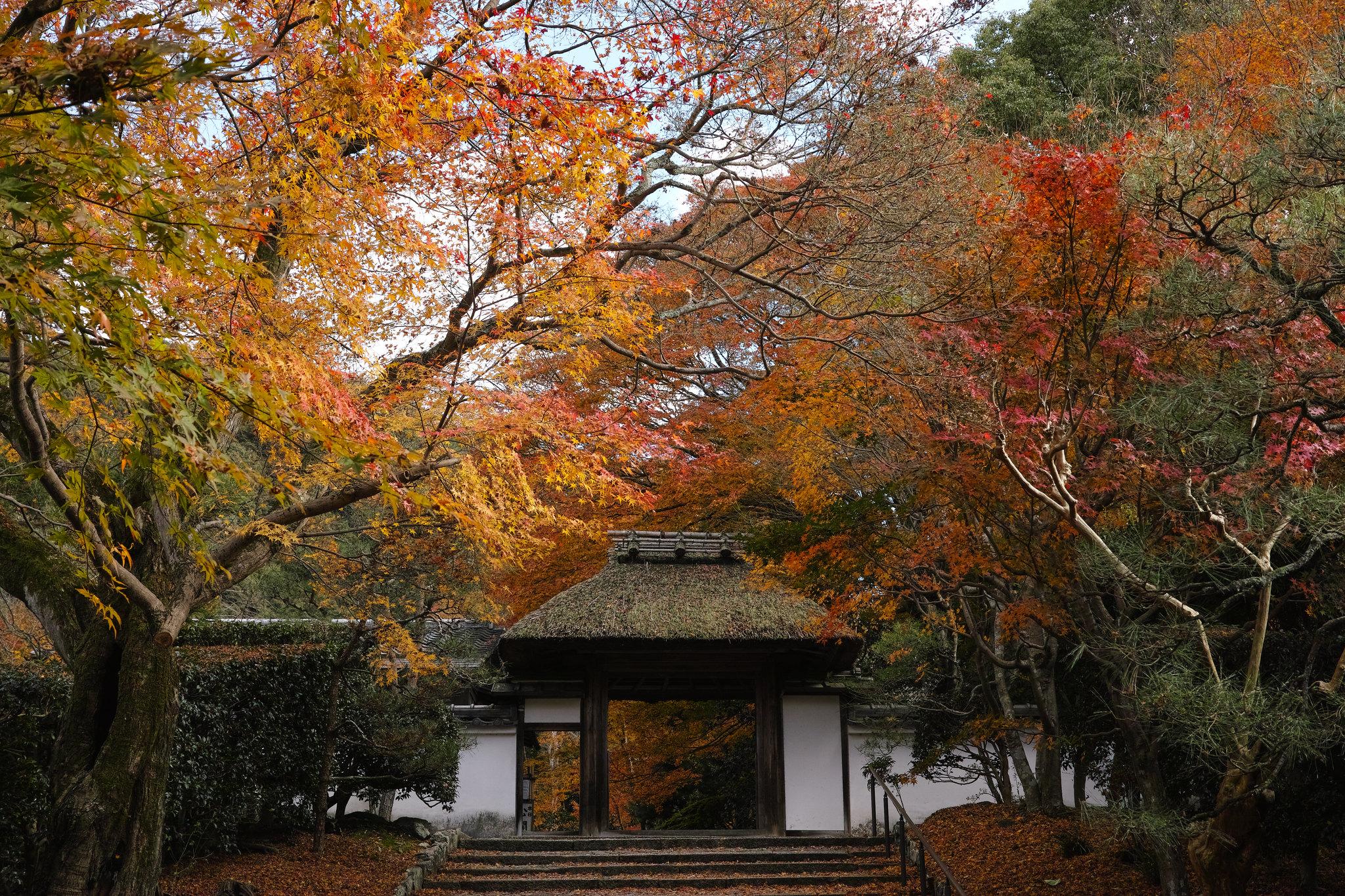 Strada più romantica del Giappone: tappe e curiosità