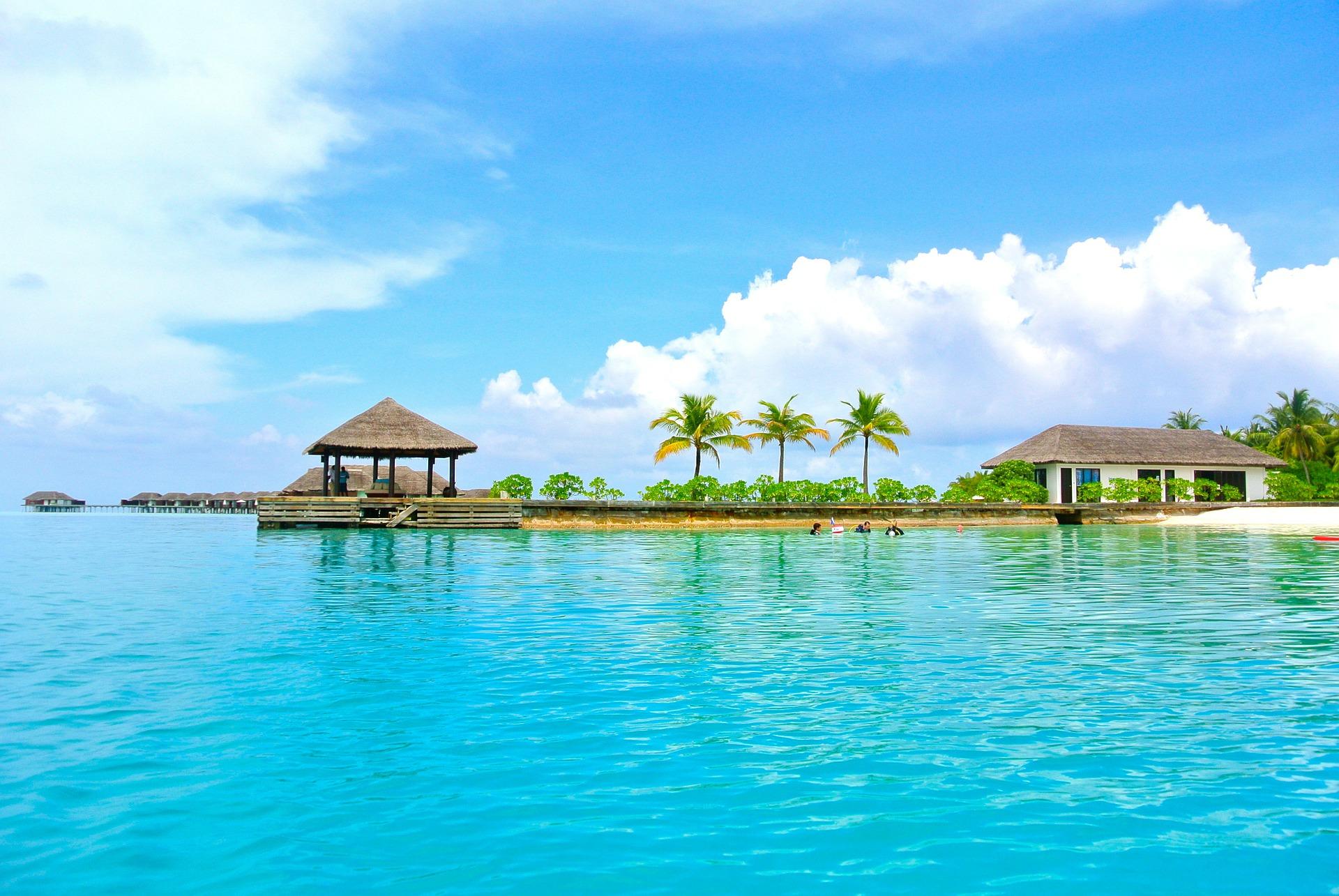 maldive-albero-di-cocco-mare-