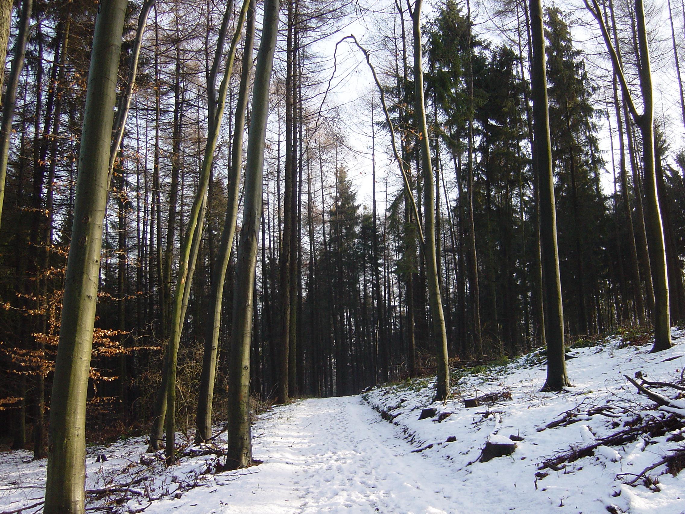 Mercatini di Natale nella Foresta Nera 2019