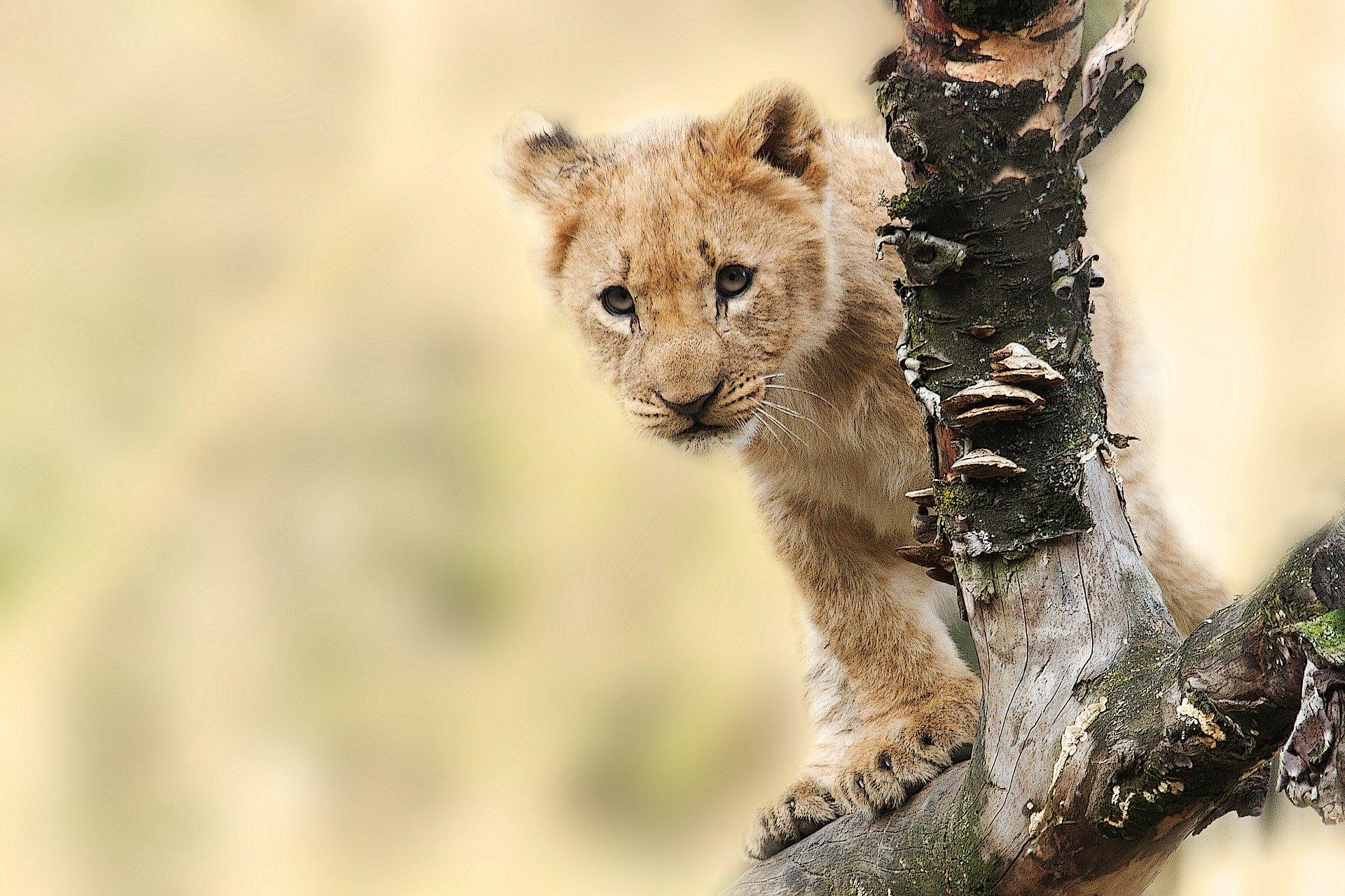 safari tanzania periodo migliore