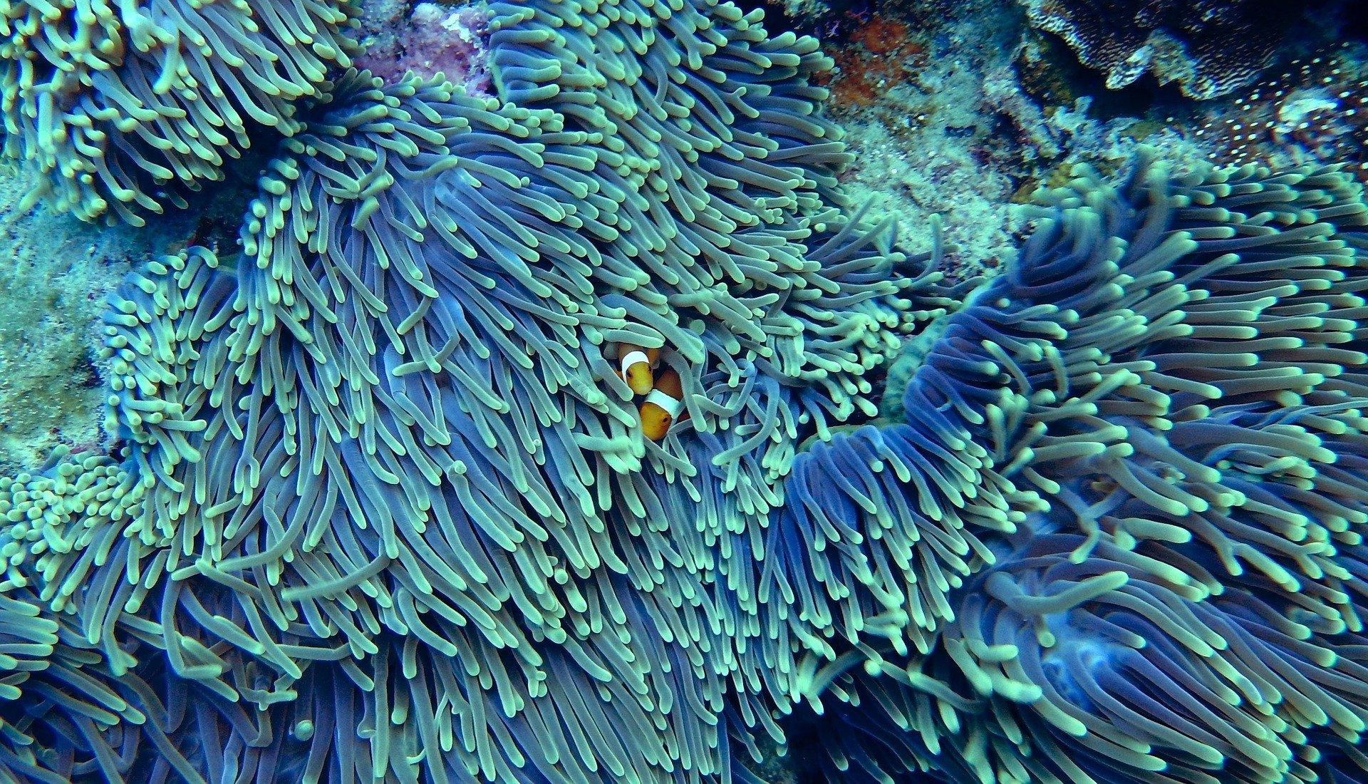 barriera corallina